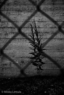 Behind fence