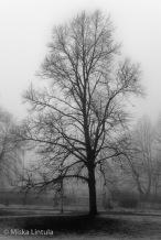 Tree in the fog