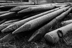 Wooden pilings